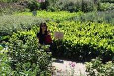 Лекарственные травы. Часть 2
